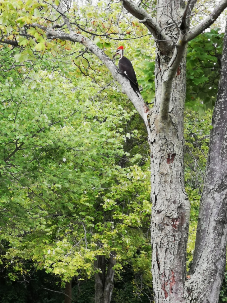 Photo of woodpecker in tree.